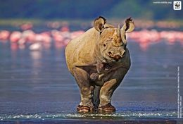 T87-014  ] Rhinoceros  WWF W. W. F. Endangered Species , China Pre-stamped Card,postal Stationery - Other