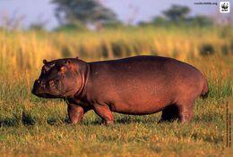 T87-015  ] Rhinoceros  WWF W. W. F. Endangered Species , China Pre-stamped Card,postal Stationery - Other