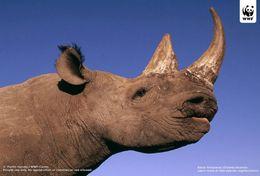 T87-018  ] Rhinoceros  WWF W. W. F. Endangered Species , China Pre-stamped Card,postal Stationery - Other