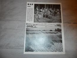 """Origineel Knipsel ( 1174 )  Uit Tijdschrift """" Ons Volk """" :  Poperinghe  Poperinge  Hop  Hoppe  Houblon  1935 - Ohne Zuordnung"""
