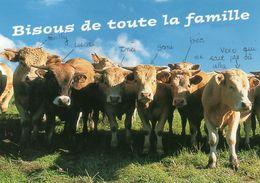 CPM - F - VACHE - BISOUS A TOUTE LA FAMILLE - Kühe