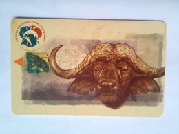 Buffalo R20 - South Africa