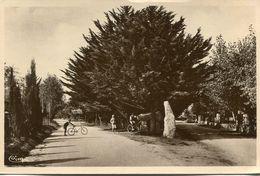 MENHIR(CARNAC) - Dolmen & Menhirs