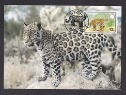 Belize: Maximum Card, 1983, 1 Stamp, Jaguar, Panther, Wild Animal, WWF Panda Logo (traces Of Use) - Belize (1973-...)