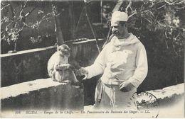 Blida - Gorges De La Chiffa - Un Pensionnaire Du Ruisseau Des Singes - Blida