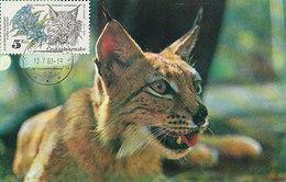 D32629 CARTE MAXIMUM CARD 1983 CZECHOSLOVAKIA -  LYNX CP ORIGINAL - Big Cats (cats Of Prey)