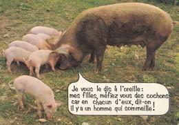 304.34         COCHON              Je Vous Le Dis A L Oreille - Cochons