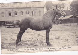 Cpa-72-dangeul- Chichinette-cheval De Race-vainqueur De Concours--eleveur M.Nicolas Dangel-photo Chambry (rouen) 1937 - Autres Communes