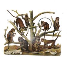DECOUPI GAUFFRE  SINGES - - Animals
