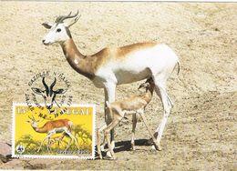 27422. Tarjeta Maxima DAKAR (Senegal) 1986. Gacela, Gazelle N'dama - Animalez De Caza