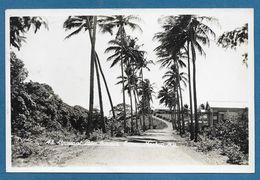 COCONUT PALM AVENUE SIMEO MACKAY N. Q. - Mackay / Whitsundays