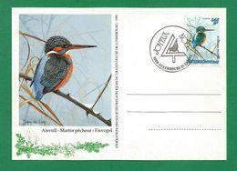 Luxemburg  1993  Mi.Nr. 1330 , Eisvogel - Maximum Card - Stempel Luxembourg 15-12- 1993 - Cartes Maximum