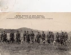 CP- Société Nationale Du Chien Sanitaire- - War 1914-18