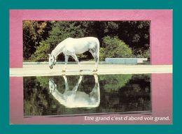 Cheval, Chevaux Houtland Ehf 02 39 02 - Pferde