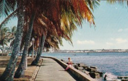 Panama Colon Palm Lined Promenades Along Atlantic Coast - Panama