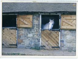 HORSE  Cavallo  Bianco Nel Box  Scuderie - Cavalli