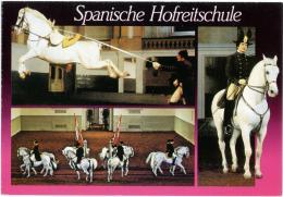 WIEN  Spanische Hofreitschule - Cavalli