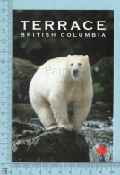 Ours, Bears - The Kermodei Bear, A Subspecies Of Black Bear..., Terrace Area Canada - Ours