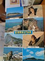GIBILTERRA  GIBRALTAR SCIMMIE  VUES VB1980 GN21452 - Gibilterra