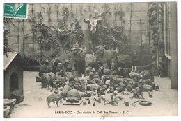 D55 - BAR LE DUC - UNE VITRINE DU CAFE DES OISEAUX (ANIMAUX DIVERS LIEVRE - PANTHERE - MARCASSIN ETC ...) - Bar Le Duc