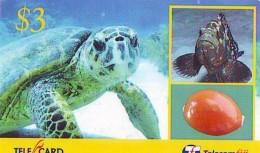 Télécarte FIJI  (2318) TORTUE *  TURTLE * SHELL * Phonecard - SCHILDKRÖTE * TELEFONKARTE - Schildpadden