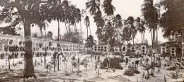 Colombie Carthagène Des Indes Cimetiere Palmiers Ancienne Photo GJ Becker 1910's - Places