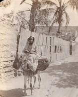 Colombie Santa Marta Femme Et Son Ane Allant Au Marche? Ancienne Photo GJ Becker 1910's - Places