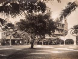 Jamaique Jamaica Kingston Myrtle Bank Hotel Arbres Ancienne Photo 1910's - Places
