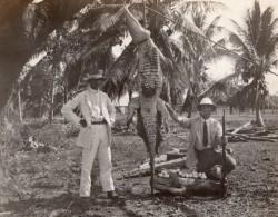 Jamaique ? Chasse Au Crocodile Oeufs Chasseurs Hunting Ancienne Photo Amateur 1920's - Places