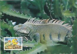 D32718 CARTE MAXIMUM CARD 1992 NETHERLANDS ANTILLES - IGUANA CP ORIGINAL - Reptiles & Amphibians