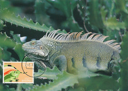 D32719 CARTE MAXIMUM CARD 1992 NETHERLANDS ANTILLES - IGUANA CP ORIGINAL - Reptiles & Amphibians