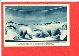 75 PARIS EXPO 1931 Cpa Animée Panorama Du Groenland Pavillon Du Danemark OURS BLANC - Exhibitions