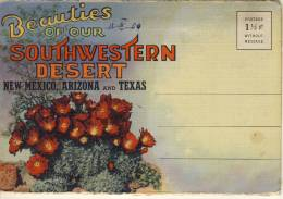 CACTUS  CACTI OF SOUTHWESTERN DESERT NEW MEXICO ARIZONA TEXAS  SOUVENIER FOLDER WITH 18 PICS - Cactus
