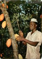 COCOA PODS     TIMBRE   CACHET - Ghana - Gold Coast