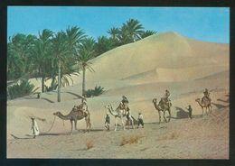 Túnez. *Caravane Du Sahara* Ed. Kahia Nº 1706. Nueva. - Túnez