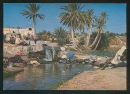 Túnez. Kébili. *Source Dans L'Oasis* Ed. Chamam Nº C188. Nueva. - Túnez