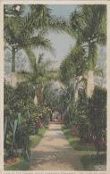Antilles - Cuba - Camagüey - Hotel Camagüey - View Of The Garden - Cuba