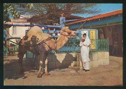 Túnez. La Marsa. *Cafe Du Saf-Saf* Ed. H. Ismail Nº H 068. Nueva. - Túnez