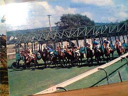 FRANCE DEPART DE COURSE AU STARTING-BOX DEAUVILLE CAVALLO HORSE CHEVAL N1975 GN21479 - Deauville