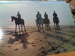 FRANCE   DEAUVILLE CAVALLO HORSE CHEVAL SU R LA PLAGE  N1970 GN21481 - Deauville