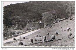 SAINT JEAN DU BRUEL - Route Du Viala Et Du Barrage - Andere Gemeenten