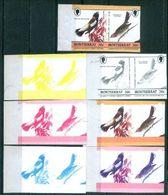 A62- Montserrat Color Proof. Birds. - Climbing Birds