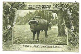 BISONS - POLSKIE TOWARZYSTWO KRAJOZNAWCZE ZUBRY PUSZCZY BJALCUJESKIEJ 1921 CPA 2 SCANS - Pologne