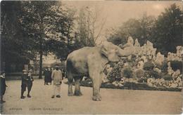 Antwerpen - Anvers: Dierentuin - Zoo - Jardin Zoologique - Olifant - Elephant - Elefanten