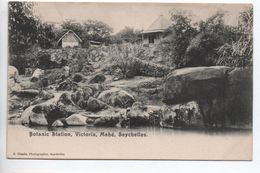 MAHE (SEYCHELLES) - BOTANIC STATION - VICTORIA - Seychelles