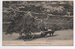 ILES SAINT PIERRE ET MIQUELON - AUTRE ATTELAGE ST PIERRAIS - LE TERRENEUVE - Saint-Pierre-et-Miquelon