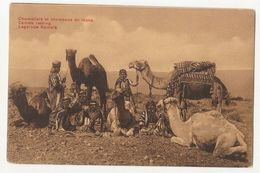 AFRICA - CAMELS RESTING - 1920s ( 2183) - Cartoline