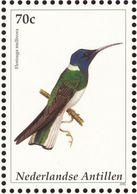 Antilles Néerlandaises. Neth. Antilles. 2002 White-necked Jacobin. Florisuga Mellivor - Hummingbirds