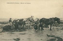 29 PLOUDALMEZEAU / Récolte Du Goémon / - Ploudalmézeau
