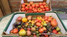 Semence Potagère : + De 10 Variétés De Graines De Tomates Et Piment - 2. Seeds